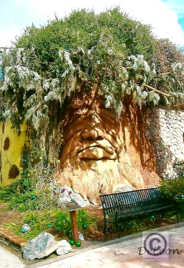 Mr Sleeping Tree